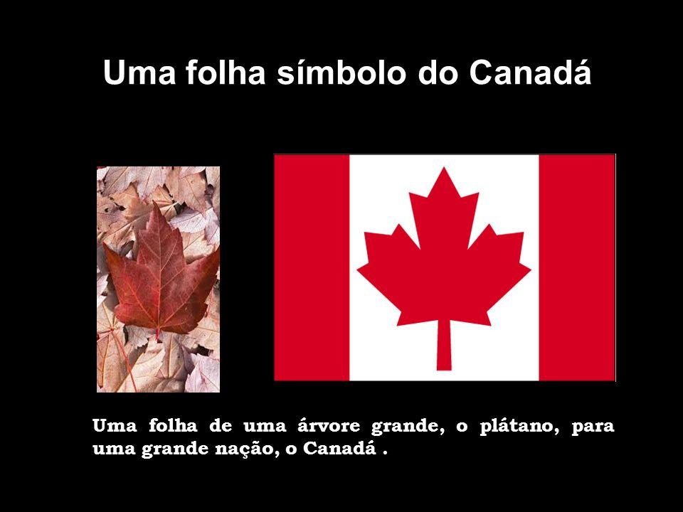FLORES SIMBÓLICAS A flor-de-lis na bandeira do Quebeque A bandeira do Quebeque Fleurdelisé tem como símbolo a Iris, conhecida como lírio e que na héraldica tem o nome de flor-de-lis e é também símbolo da realeza francesa.
