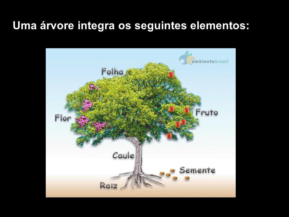 ÁRVORE planta de grande porte, com raízes, caule lenhoso do tipo tronco, que forma ramos acima do nível do solo, que se estendem até à copa.