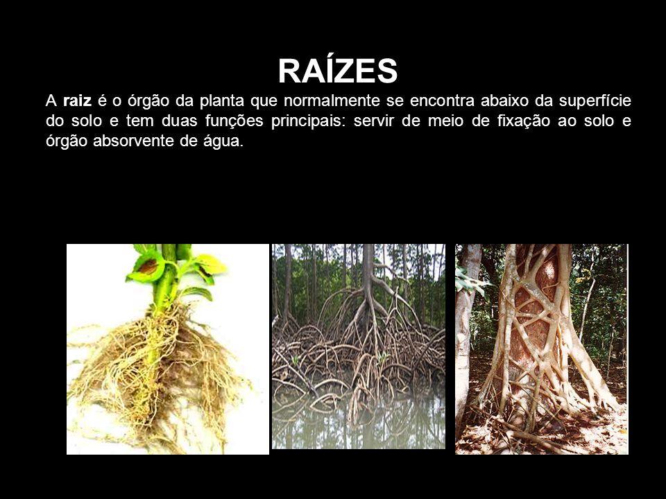 Uma árvore integra os seguintes elementos:
