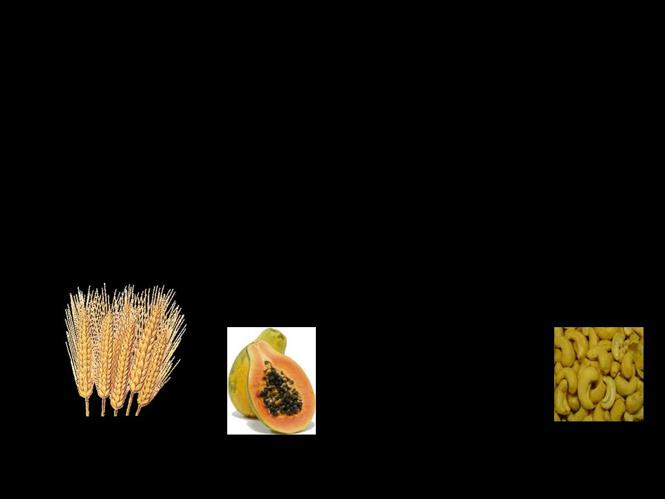 Texto: Luís Aguilar Formatação: Vitália Rodrigues Música: Continue to be de David Arkenstone Contacto: linguaportuguesa@live.calinguaportuguesa@live.ca Edição: Retorno à Unidade de Aprendizagem, Fauna e Flora : © Todos os Direitos Reservados