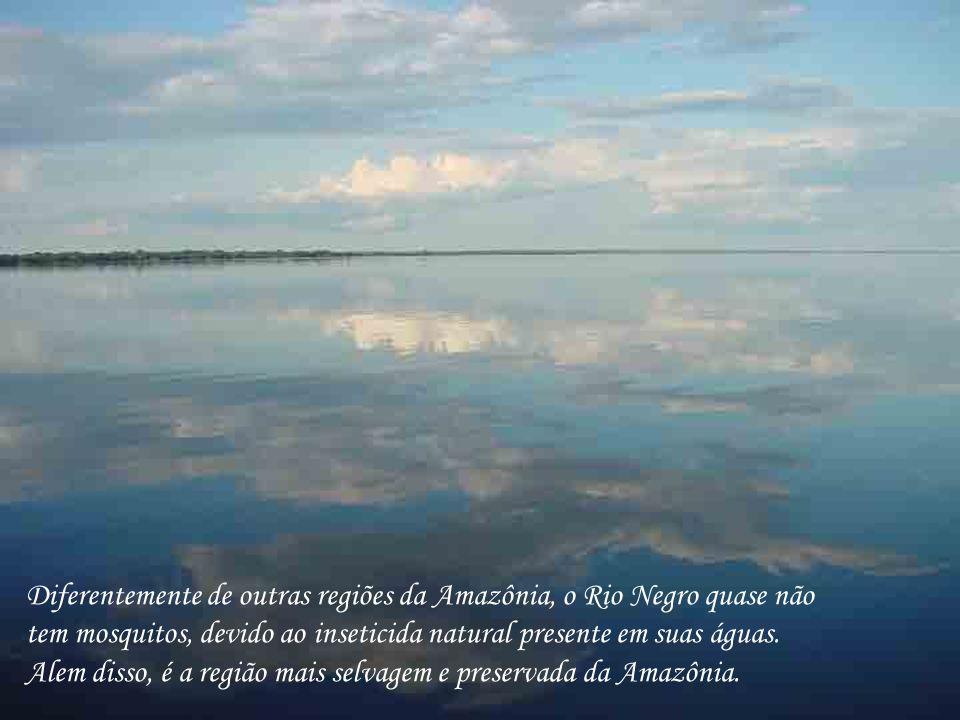 Diferentemente de outras regiões da Amazônia, o Rio Negro quase não tem mosquitos, devido ao inseticida natural presente em suas águas. Alem disso, é