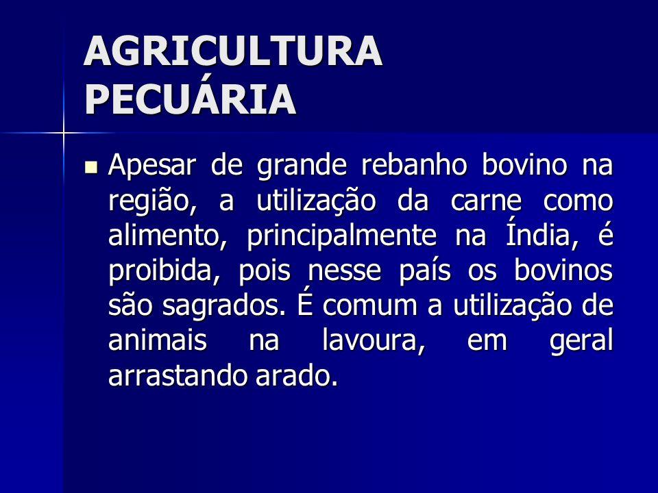 AGRICULTURA PECUÁRIA Apesar de grande rebanho bovino na região, a utilização da carne como alimento, principalmente na Índia, é proibida, pois nesse p
