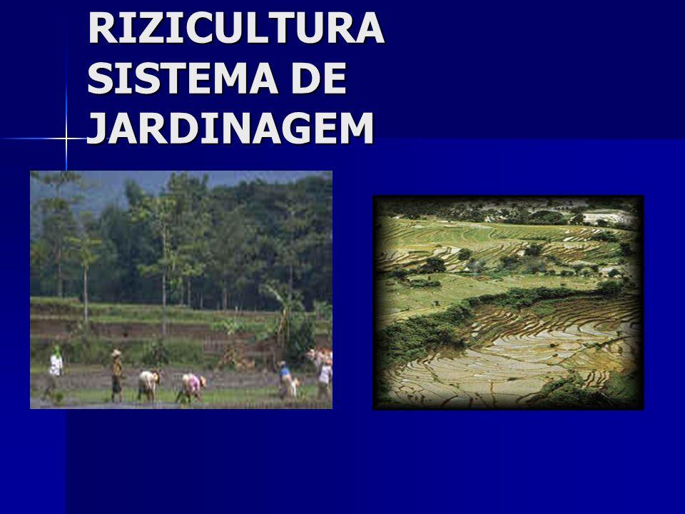 RIZICULTURA SISTEMA DE JARDINAGEM