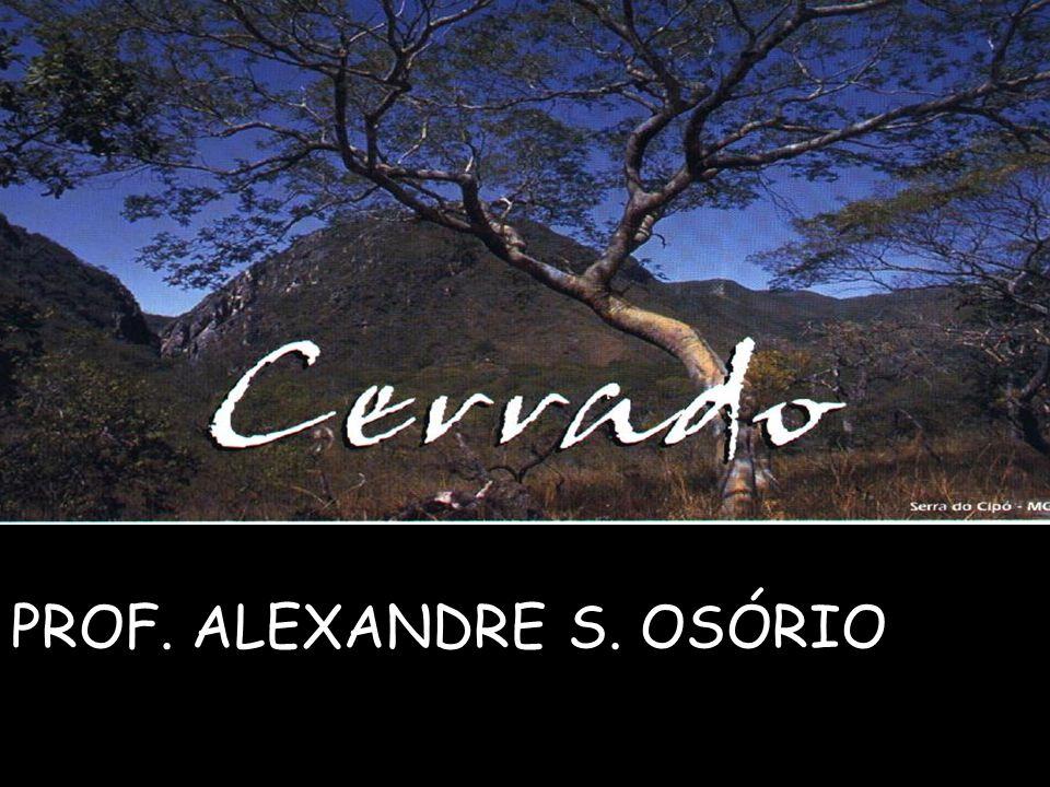 CERRADO BRASILEIRO FITOFISIONOMIA DO CERRADO Bastante diversificada, apresentando desde formas campestres abertas como os campos limpos de cerrado, até formas relativamente densas, florestais como o cerradão.