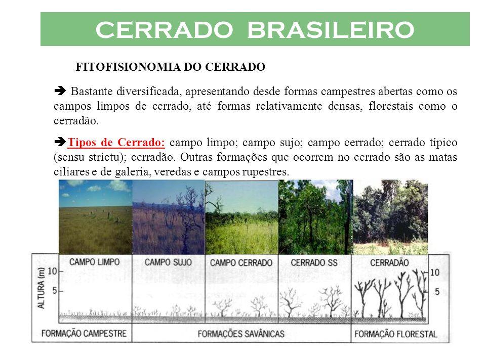 CERRADO BRASILEIRO FITOFISIONOMIA DO CERRADO Bastante diversificada, apresentando desde formas campestres abertas como os campos limpos de cerrado, at