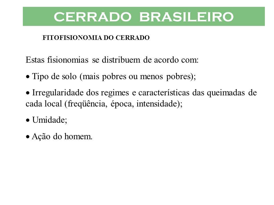 CERRADO BRASILEIRO FITOFISIONOMIA DO CERRADO Estas fisionomias se distribuem de acordo com: Tipo de solo (mais pobres ou menos pobres); Irregularidade