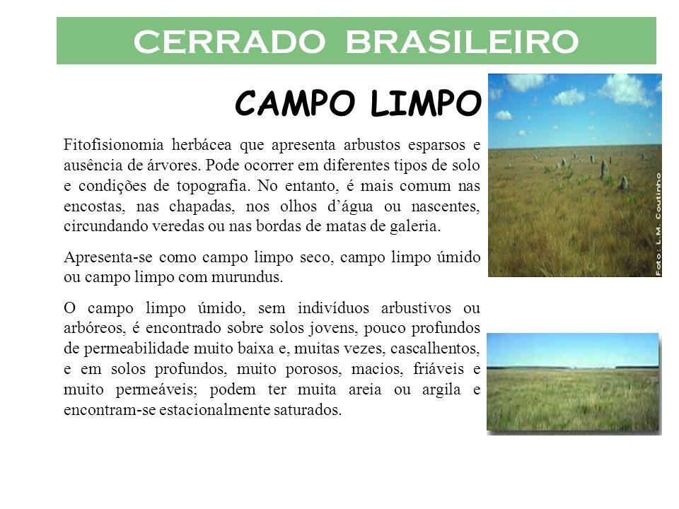CERRADO BRASILEIRO CAMPO LIMPO Fitofisionomia herbácea que apresenta arbustos esparsos e ausência de árvores. Pode ocorrer em diferentes tipos de solo