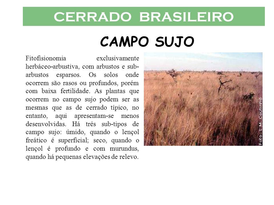 CERRADO BRASILEIRO CAMPO SUJO Fitofisionomia exclusivamente herbáceo-arbustiva, com arbustos e sub- arbustos esparsos. Os solos onde ocorrem são rasos