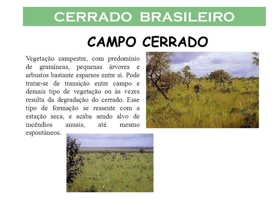 CERRADO BRASILEIRO CAMPO CERRADO Vegetação campestre, com predomínio de gramíneas, pequenas árvores e arbustos bastante esparsos entre si. Pode tratar