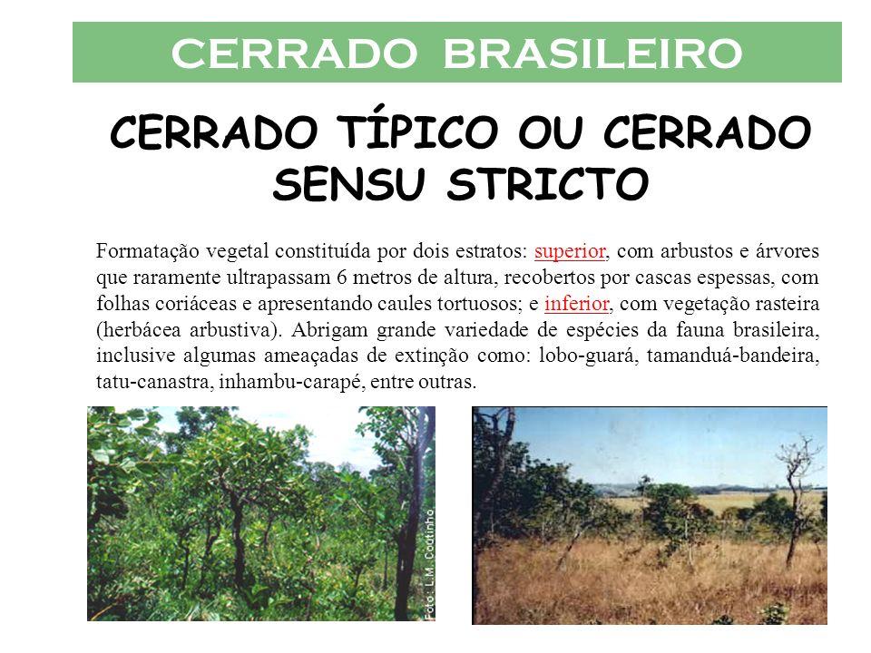 CERRADO BRASILEIRO CERRADO TÍPICO OU CERRADO SENSU STRICTO Formatação vegetal constituída por dois estratos: superior, com arbustos e árvores que rara