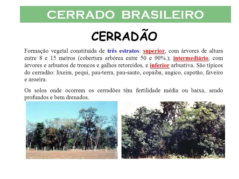 CERRADO BRASILEIRO CERRADÃO Formação vegetal constituída de três estratos: superior, com árvores de altura entre 8 e 15 metros (cobertura arbórea entr