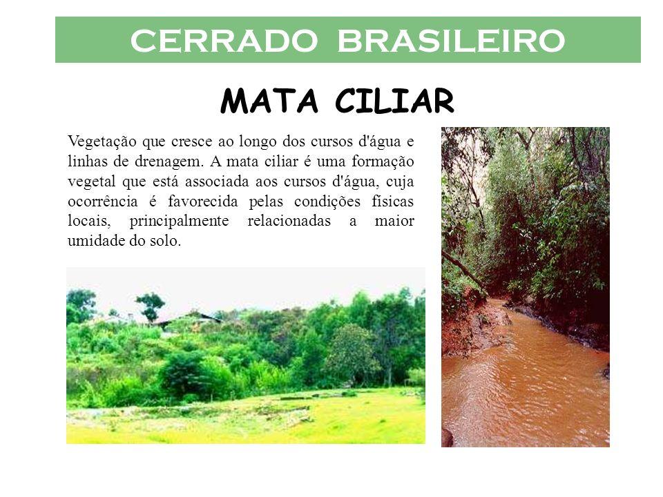 CERRADO BRASILEIRO MATA CILIAR Vegetação que cresce ao longo dos cursos d'água e linhas de drenagem. A mata ciliar é uma formação vegetal que está ass