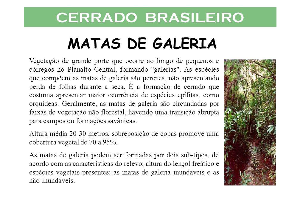 CERRADO BRASILEIRO MATAS DE GALERIA Vegetação de grande porte que ocorre ao longo de pequenos e córregos no Planalto Central, formando