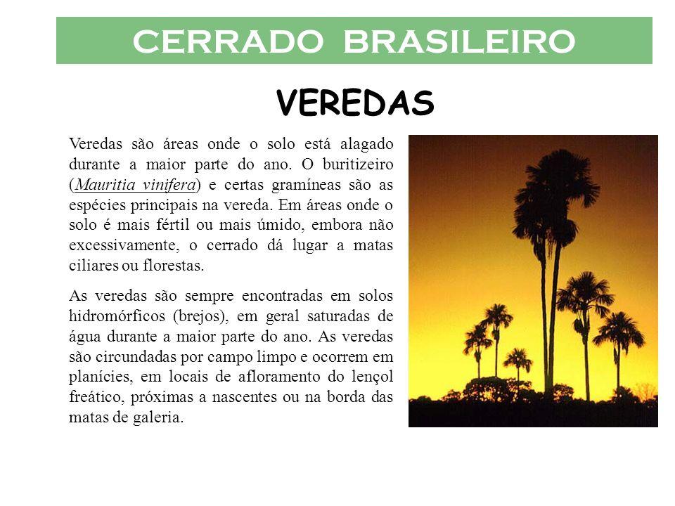 CERRADO BRASILEIRO VEREDAS Veredas são áreas onde o solo está alagado durante a maior parte do ano. O buritizeiro (Mauritia vinifera) e certas gramíne