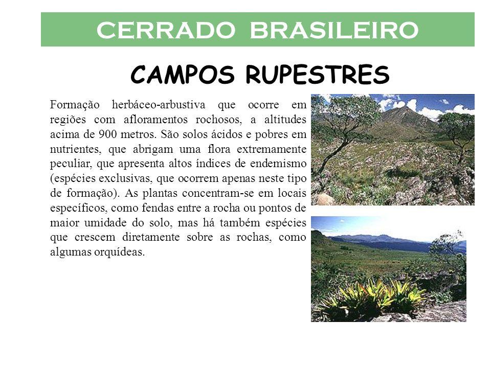 CERRADO BRASILEIRO CAMPOS RUPESTRES Formação herbáceo-arbustiva que ocorre em regiões com afloramentos rochosos, a altitudes acima de 900 metros. São