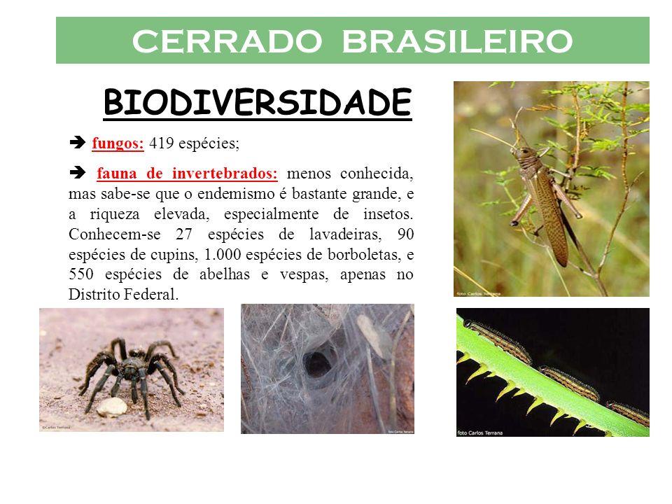 CERRADO BRASILEIRO BIODIVERSIDADE fungos: 419 espécies; fauna de invertebrados: menos conhecida, mas sabe-se que o endemismo é bastante grande, e a ri