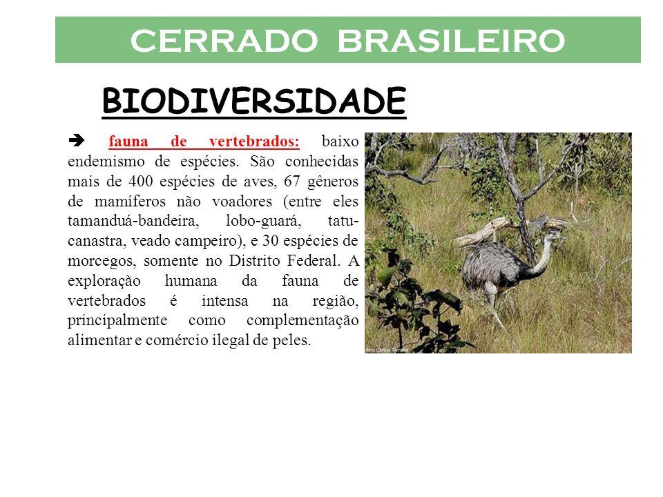 CERRADO BRASILEIRO BIODIVERSIDADE fauna de vertebrados: baixo endemismo de espécies. São conhecidas mais de 400 espécies de aves, 67 gêneros de mamífe