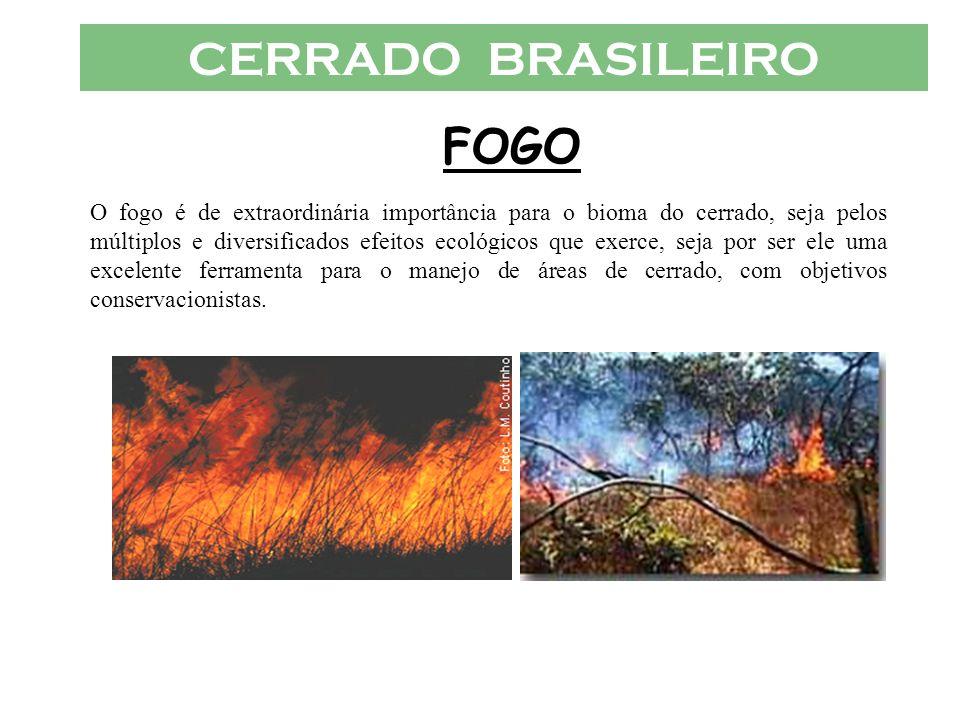 CERRADO BRASILEIRO FOGO O fogo é de extraordinária importância para o bioma do cerrado, seja pelos múltiplos e diversificados efeitos ecológicos que e
