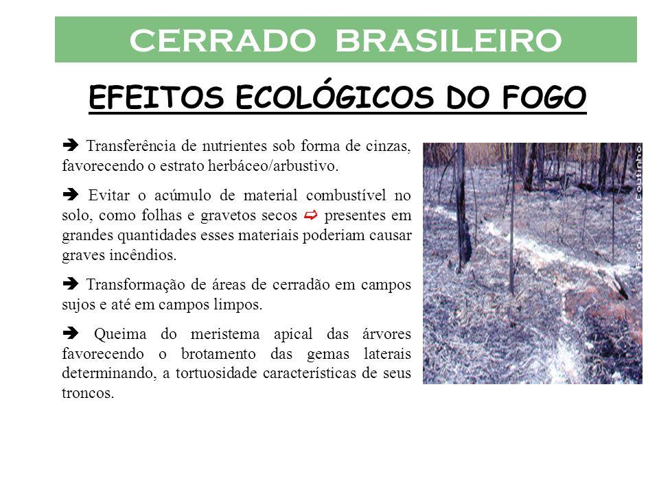CERRADO BRASILEIRO EFEITOS ECOLÓGICOS DO FOGO Transferência de nutrientes sob forma de cinzas, favorecendo o estrato herbáceo/arbustivo. Evitar o acúm