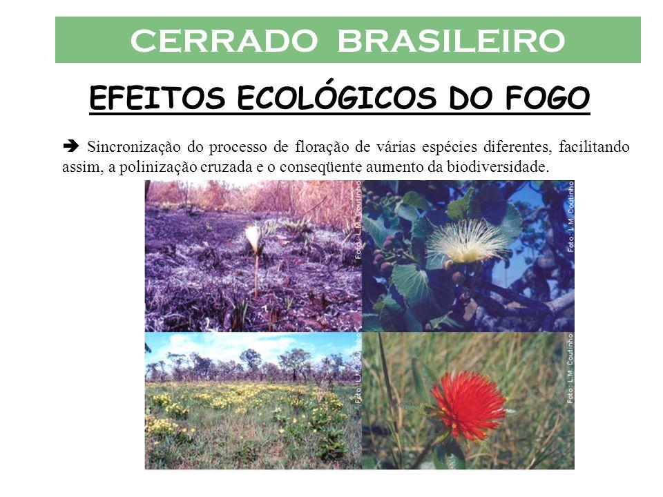 CERRADO BRASILEIRO EFEITOS ECOLÓGICOS DO FOGO Sincronização do processo de floração de várias espécies diferentes, facilitando assim, a polinização cr
