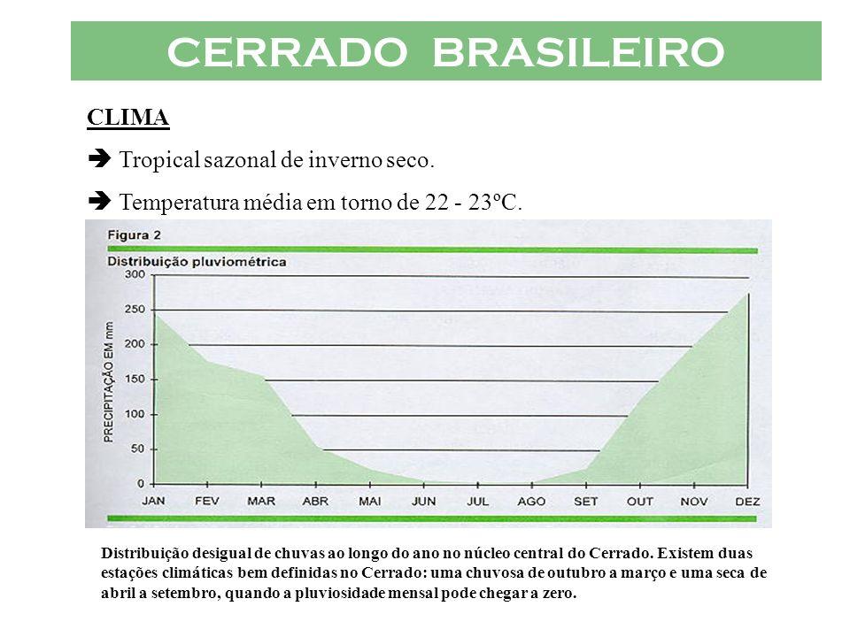 CERRADO BRASILEIRO CLIMA Tropical sazonal de inverno seco. Temperatura média em torno de 22 - 23ºC. Distribuição desigual de chuvas ao longo do ano no
