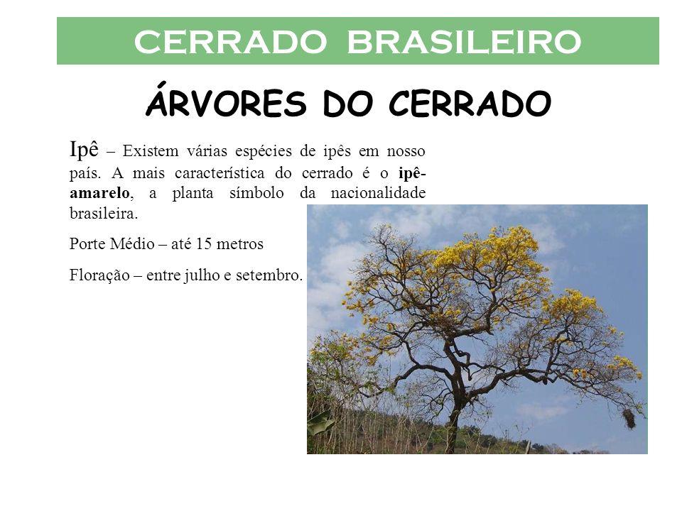 CERRADO BRASILEIRO ÁRVORES DO CERRADO Ipê – Existem várias espécies de ipês em nosso país. A mais característica do cerrado é o ipê- amarelo, a planta