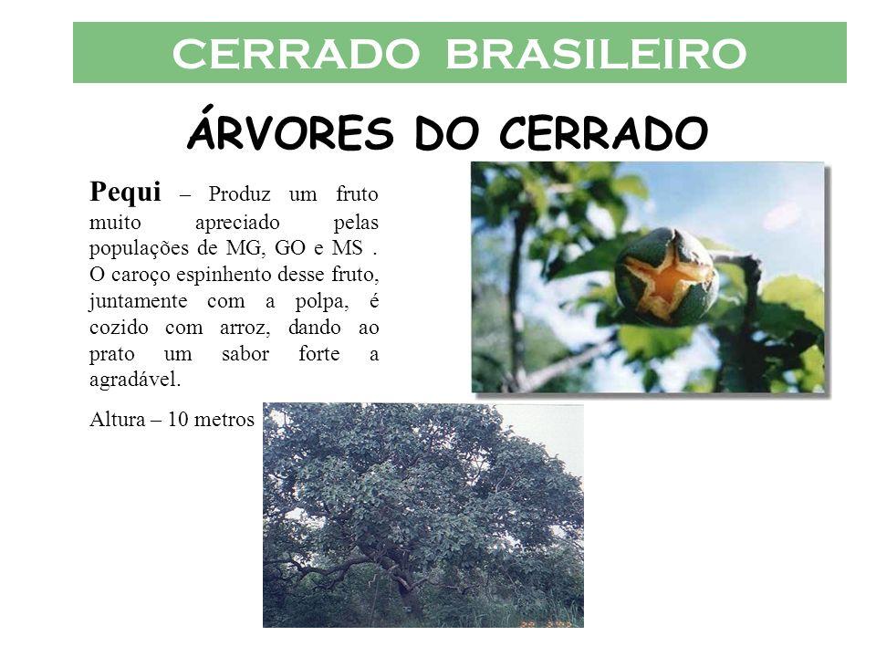 CERRADO BRASILEIRO ÁRVORES DO CERRADO Pequi – Produz um fruto muito apreciado pelas populações de MG, GO e MS. O caroço espinhento desse fruto, juntam