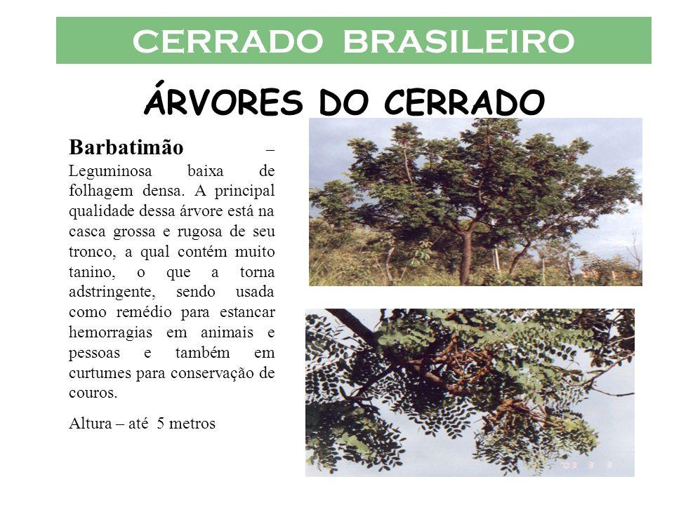 CERRADO BRASILEIRO ÁRVORES DO CERRADO Barbatimão – Leguminosa baixa de folhagem densa. A principal qualidade dessa árvore está na casca grossa e rugos