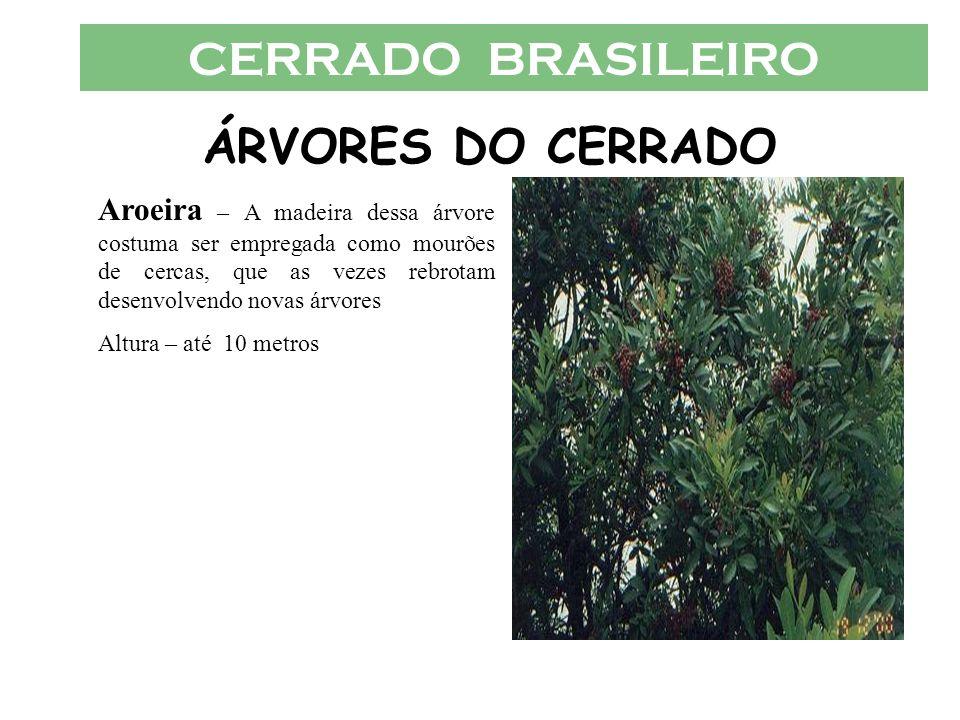 CERRADO BRASILEIRO ÁRVORES DO CERRADO Aroeira – A madeira dessa árvore costuma ser empregada como mourões de cercas, que as vezes rebrotam desenvolven