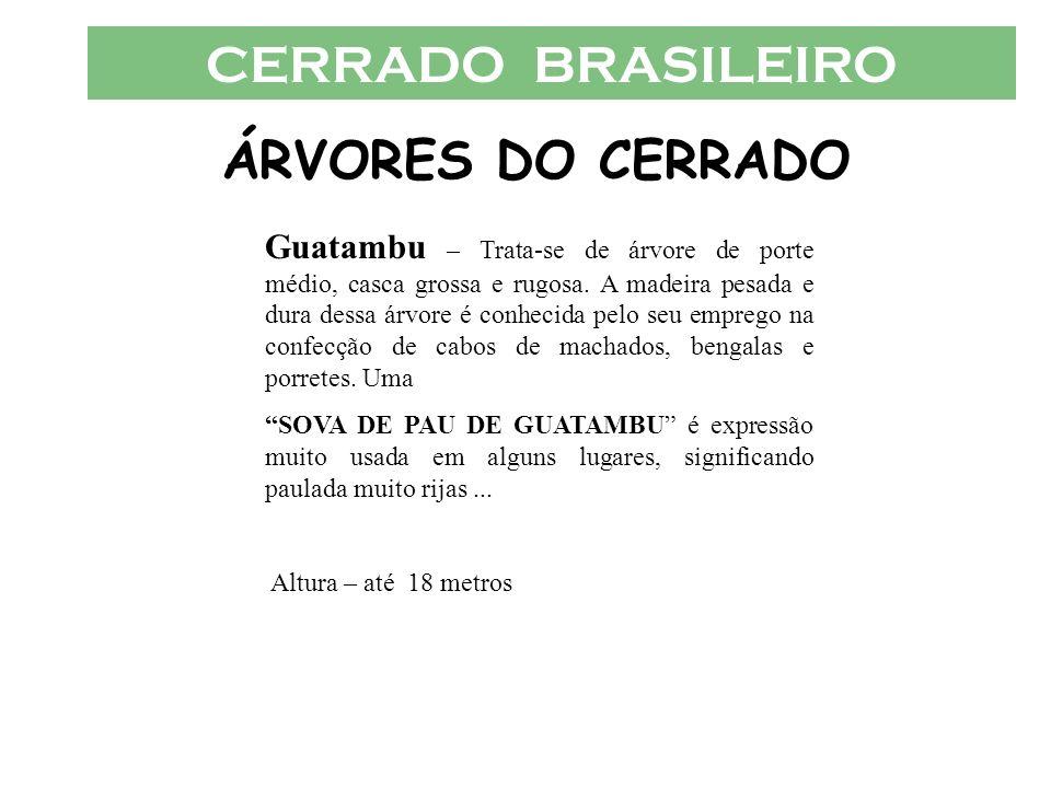 CERRADO BRASILEIRO ÁRVORES DO CERRADO Guatambu – Trata-se de árvore de porte médio, casca grossa e rugosa. A madeira pesada e dura dessa árvore é conh
