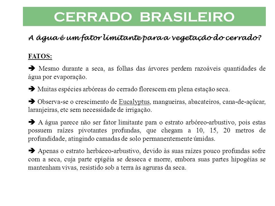 CERRADO BRASILEIRO A água é um fator limitante para a vegetação do cerrado? FATOS: Mesmo durante a seca, as folhas das árvores perdem razoáveis quanti