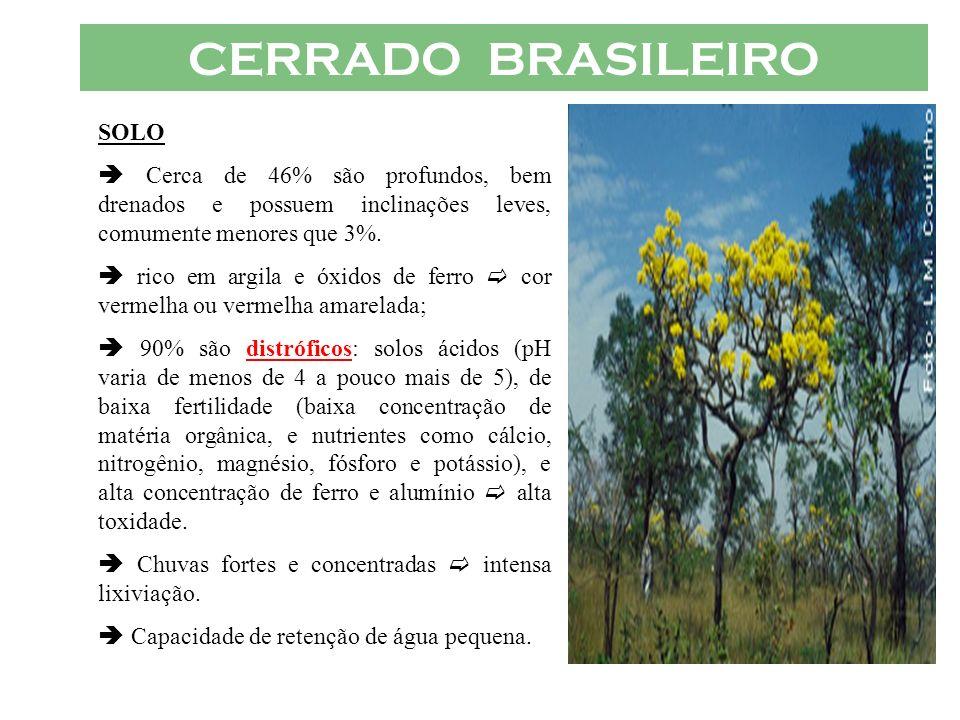 CERRADO BRASILEIRO SOLO Cerca de 46% são profundos, bem drenados e possuem inclinações leves, comumente menores que 3%. rico em argila e óxidos de fer