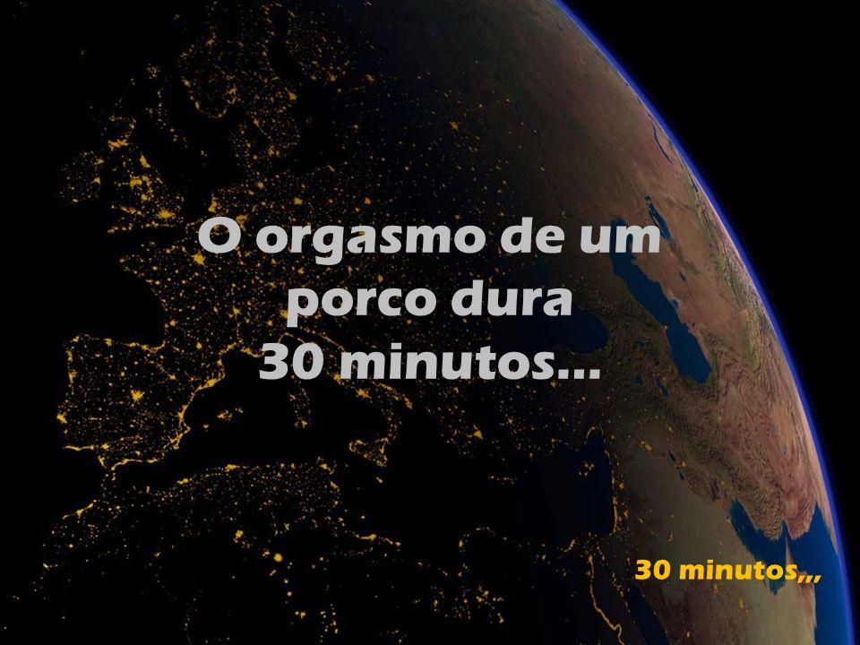 O orgasmo de um porco dura 30 minutos… 30 minutos,,,