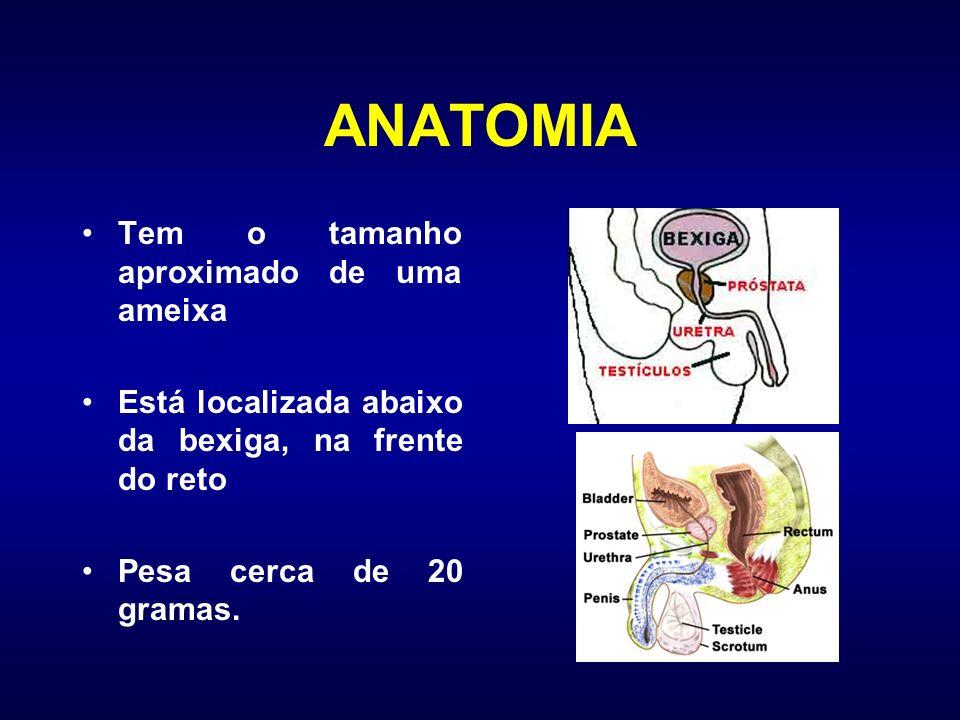 ANATOMIA Tem o tamanho aproximado de uma ameixa Está localizada abaixo da bexiga, na frente do reto Pesa cerca de 20 gramas.