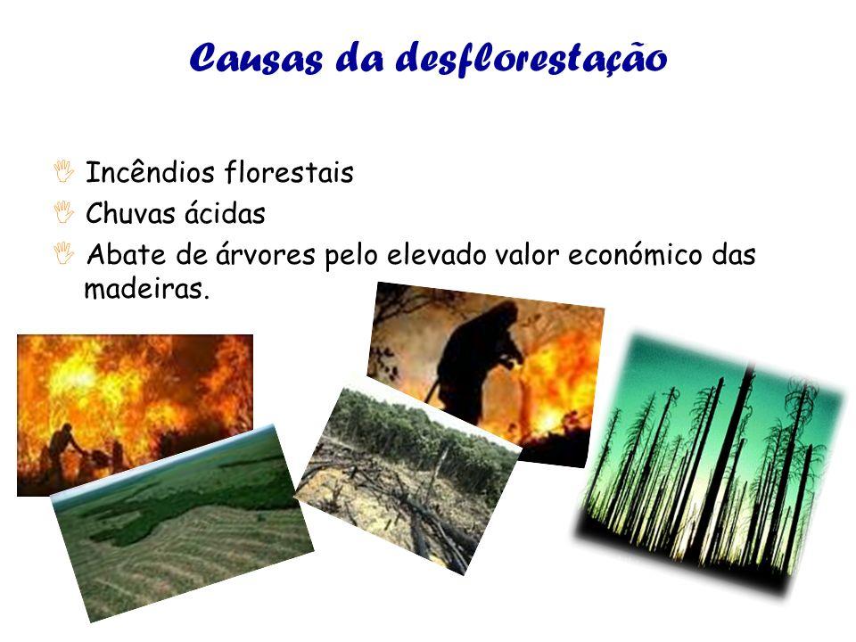 Causas da desflorestação Incêndios florestais Chuvas ácidas Abate de árvores pelo elevado valor económico das madeiras.
