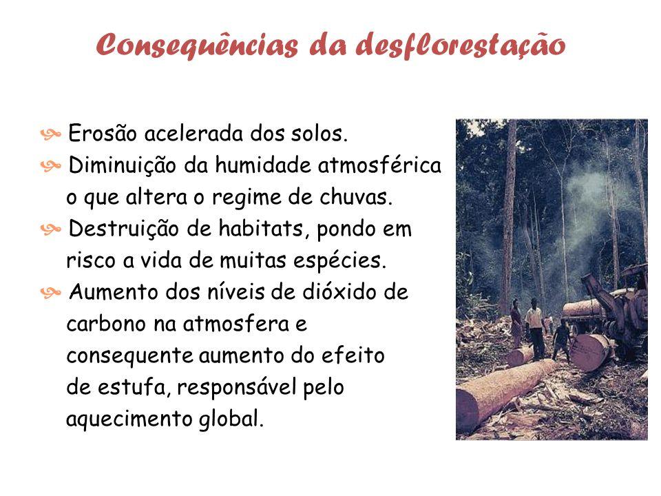 Consequências da desflorestação Erosão acelerada dos solos.