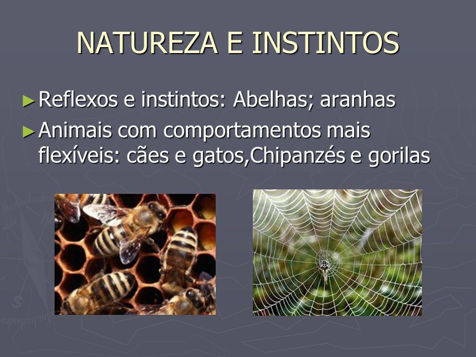 NATUREZA E INSTINTOS Reflexos e instintos: Abelhas; aranhas Reflexos e instintos: Abelhas; aranhas Animais com comportamentos mais flexíveis: cães e g