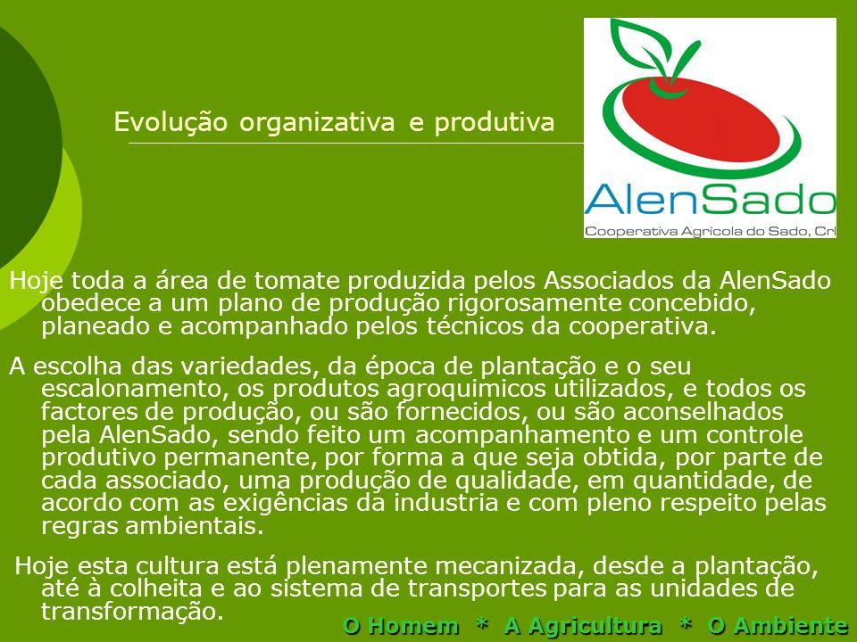 Hoje toda a área de tomate produzida pelos Associados da AlenSado obedece a um plano de produção rigorosamente concebido, planeado e acompanhado pelos