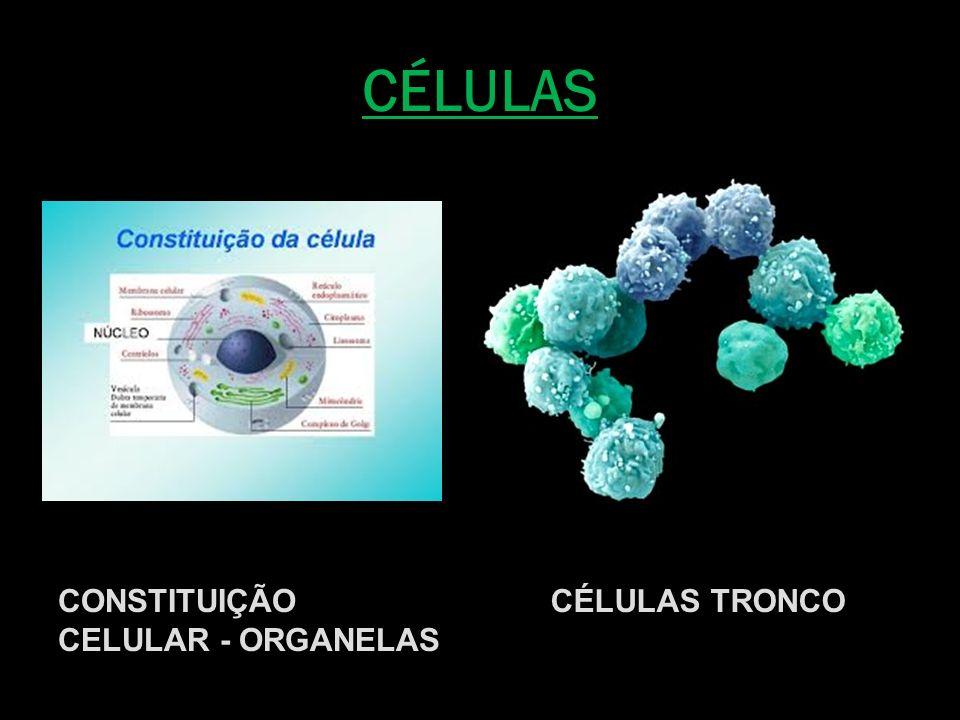 MITOCÔNDRIA = USINA PRODUTORA DE ENERGIA PARA O METABOLISMO CELULAR COMBUSTÍVEL + OXIGÊNIO = ENERGIA (ATP) MICROGRAFIA ELETRÔNICA