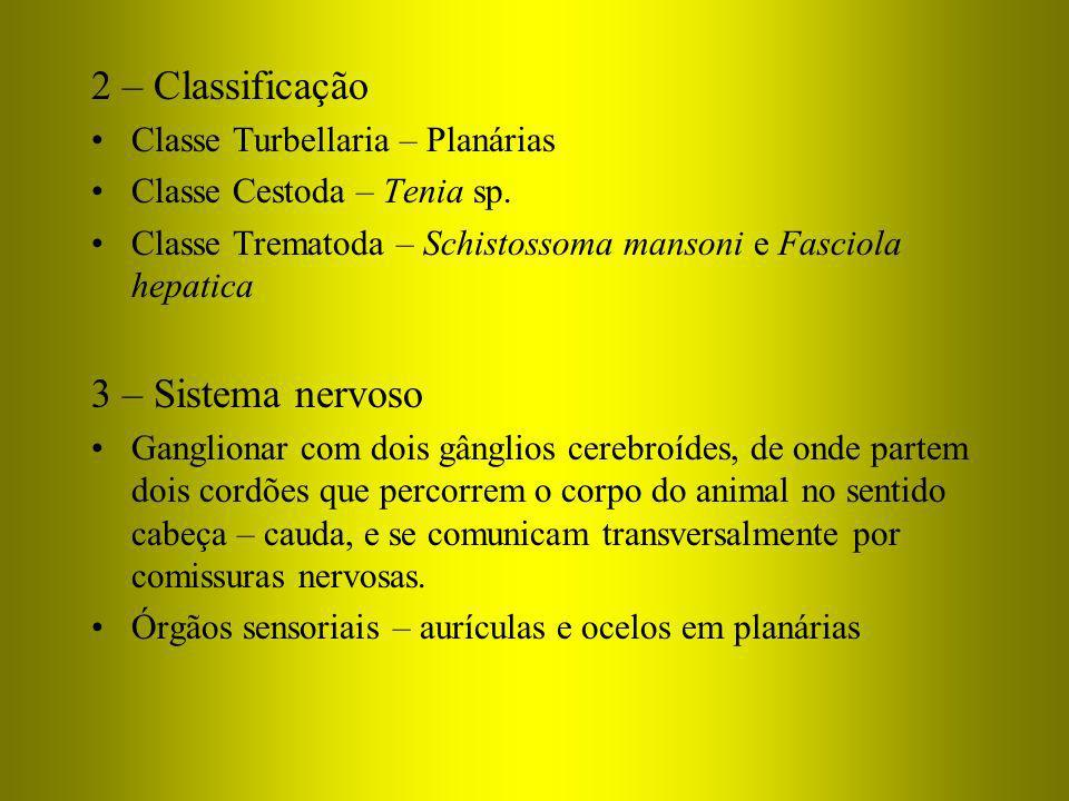 2 – Classificação Classe Turbellaria – Planárias Classe Cestoda – Tenia sp. Classe Trematoda – Schistossoma mansoni e Fasciola hepatica 3 – Sistema ne