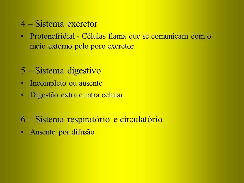 4 – Sistema excretor Protonefridial - Células flama que se comunicam com o meio externo pelo poro excretor 5 – Sistema digestivo Incompleto ou ausente
