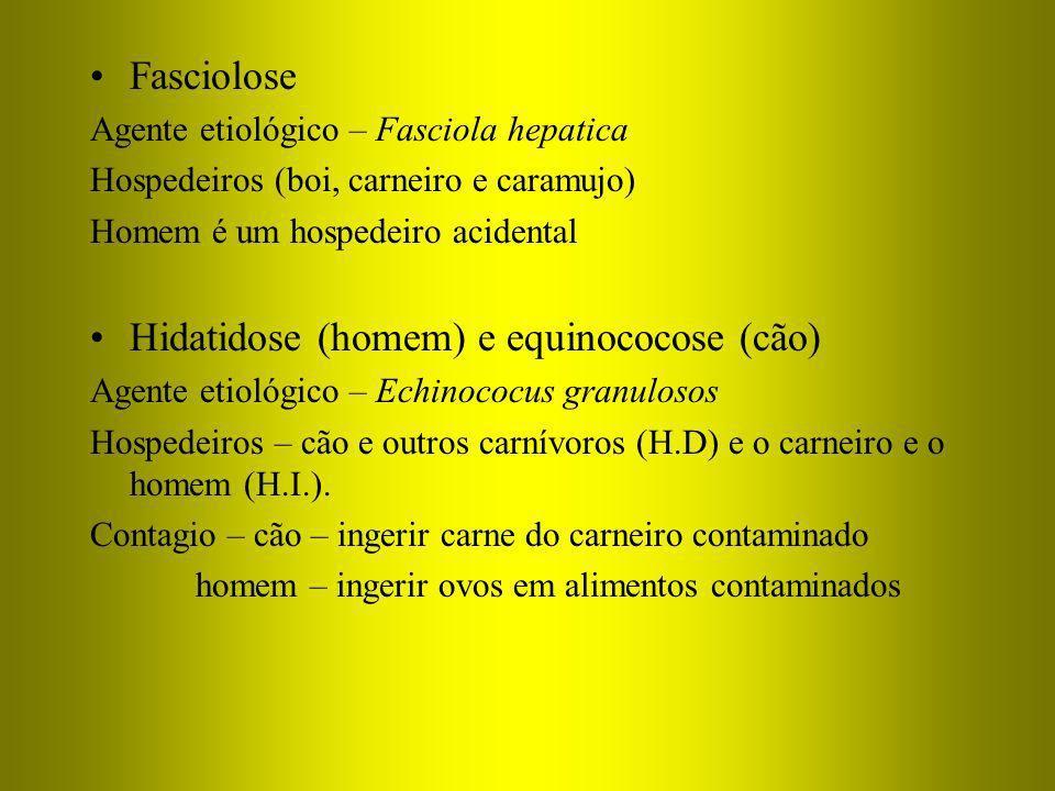 Fasciolose Agente etiológico – Fasciola hepatica Hospedeiros (boi, carneiro e caramujo) Homem é um hospedeiro acidental Hidatidose (homem) e equinococ