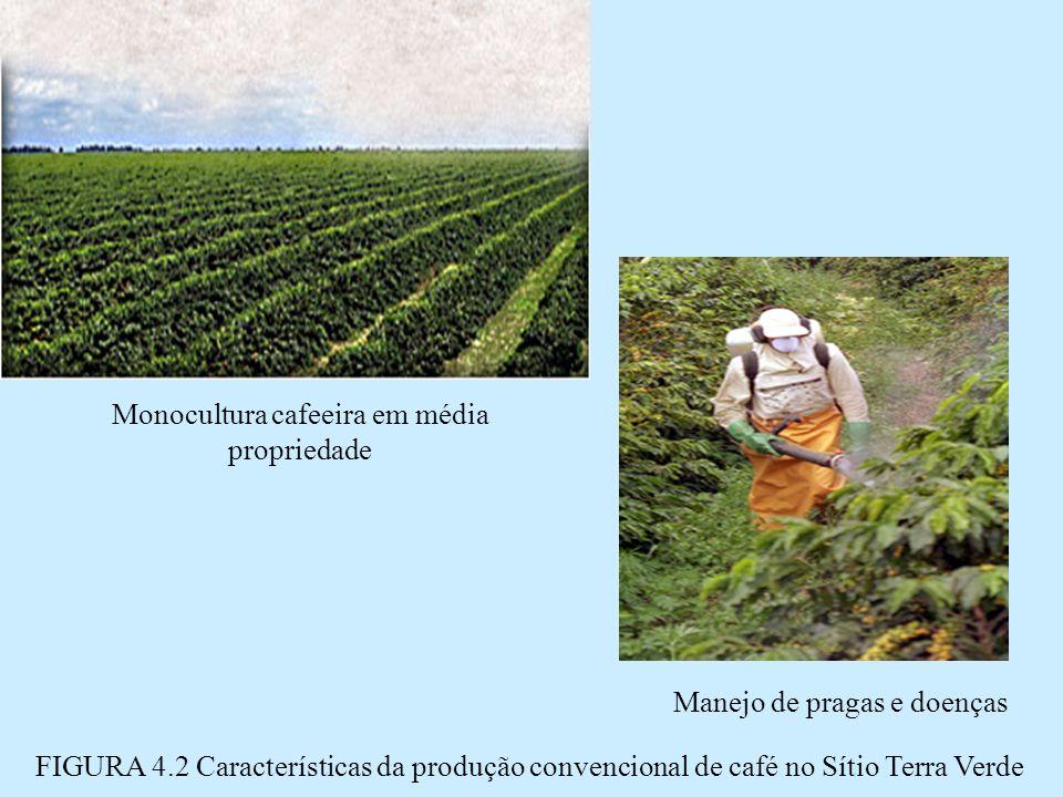 Manejo de pragas e doenças Monocultura cafeeira em média propriedade FIGURA 4.2 Características da produção convencional de café no Sítio Terra Verde