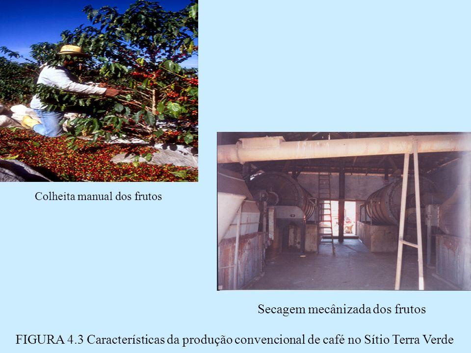 Secagem mecânizada dos frutos FIGURA 4.3 Características da produção convencional de café no Sítio Terra Verde Colheita manual dos frutos