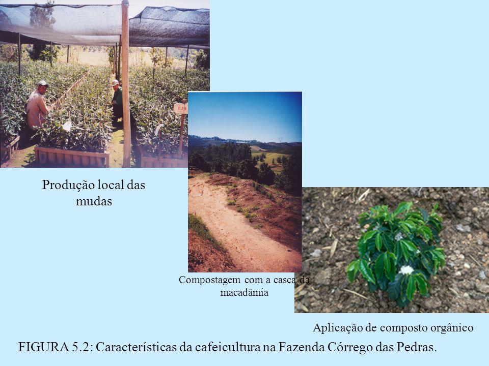 FIGURA 5.2: Características da cafeicultura na Fazenda Córrego das Pedras.