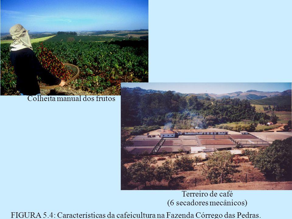 Colheita manual dos frutos Terreiro de café (6 secadores mecânicos) FIGURA 5.4: Características da cafeicultura na Fazenda Córrego das Pedras.