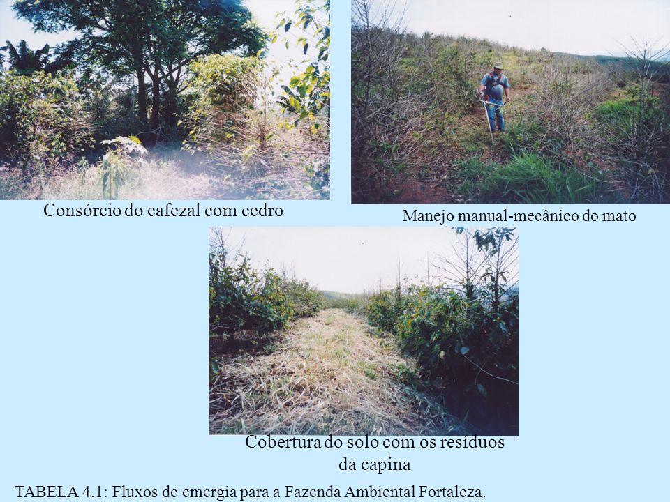 TABELA 4.1: Fluxos de emergia para a Fazenda Ambiental Fortaleza.