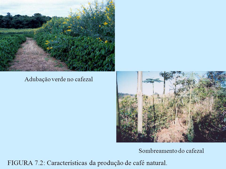 Adubação verde no cafezal FIGURA 7.2: Características da produção de café natural.