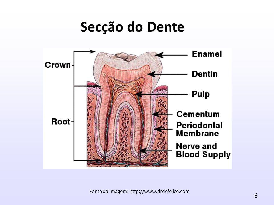 6 Fonte da Imagem: http://www.drdefelice.com Secção do Dente