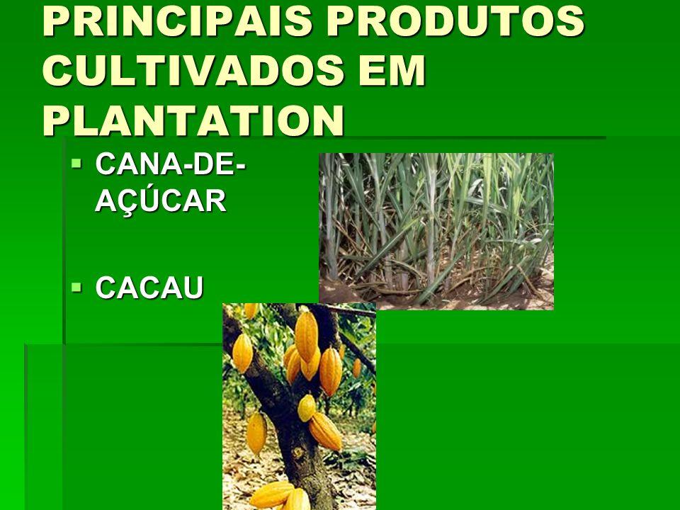 PRINCIPAIS PRODUTOS CULTIVADOS EM PLANTATION CANA-DE- AÇÚCAR CANA-DE- AÇÚCAR CACAU CACAU